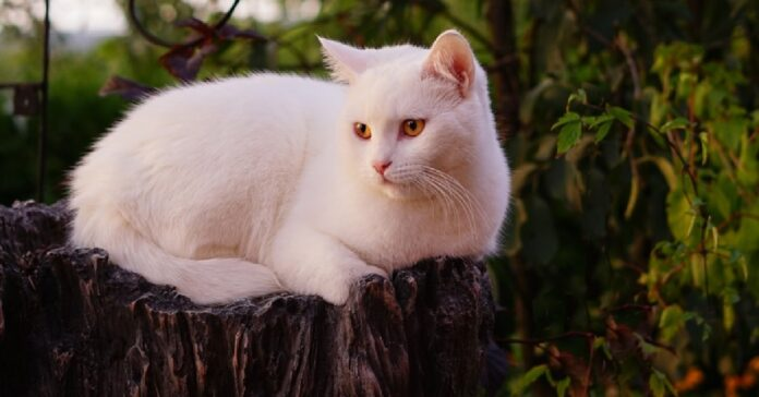 gattino europeo diventa famoso le sue uscite porta video avventure