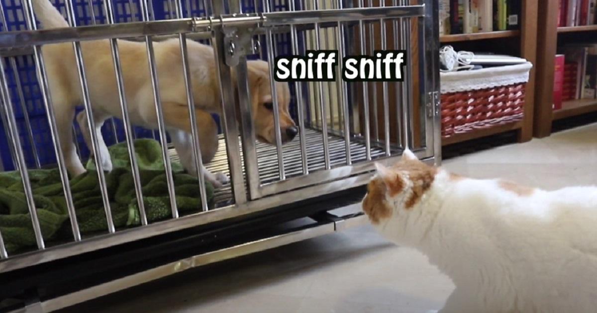 micio cane vede