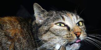 gattino leo mette faccia dove non metterla sua video