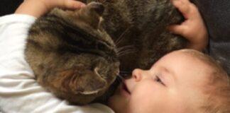 bimba conforta gattino