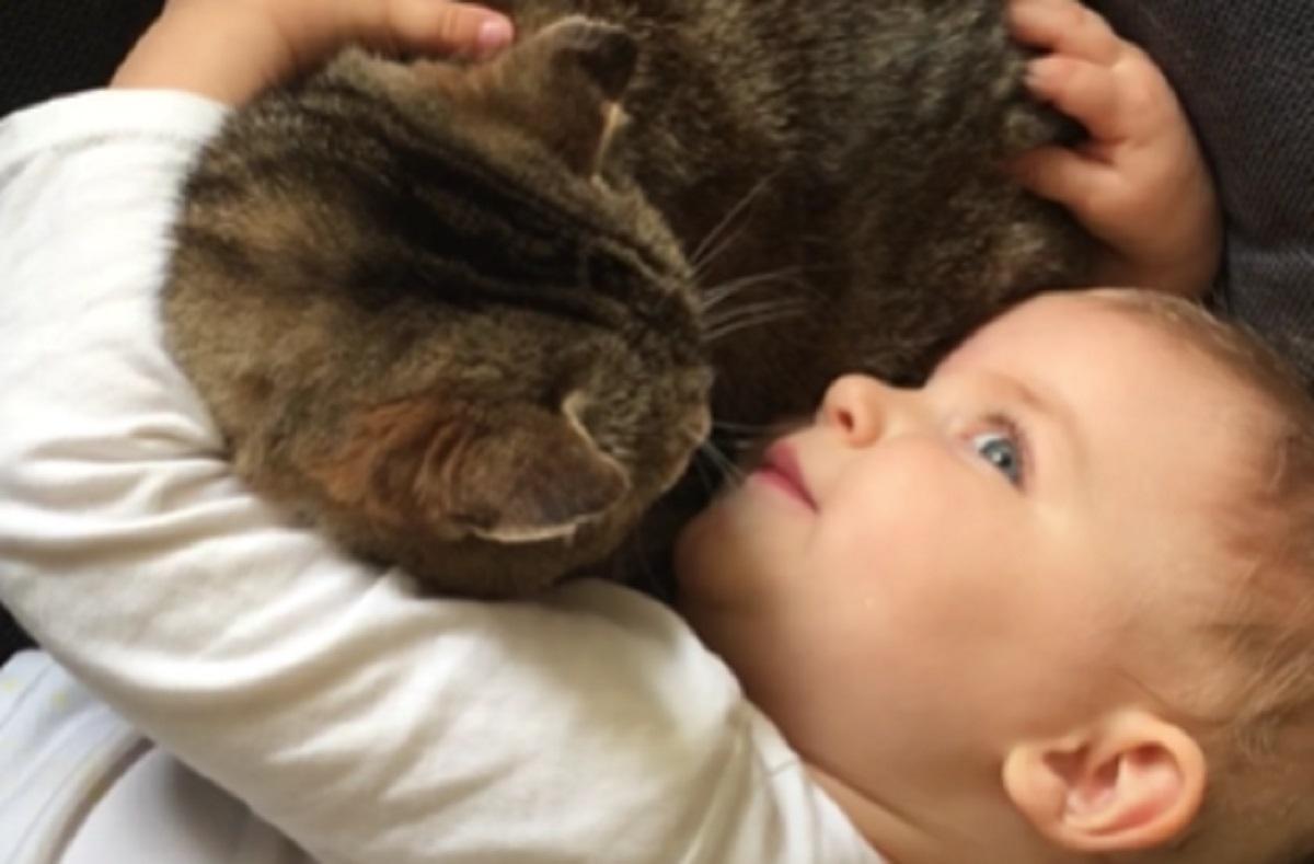 sorellina bambina gatto