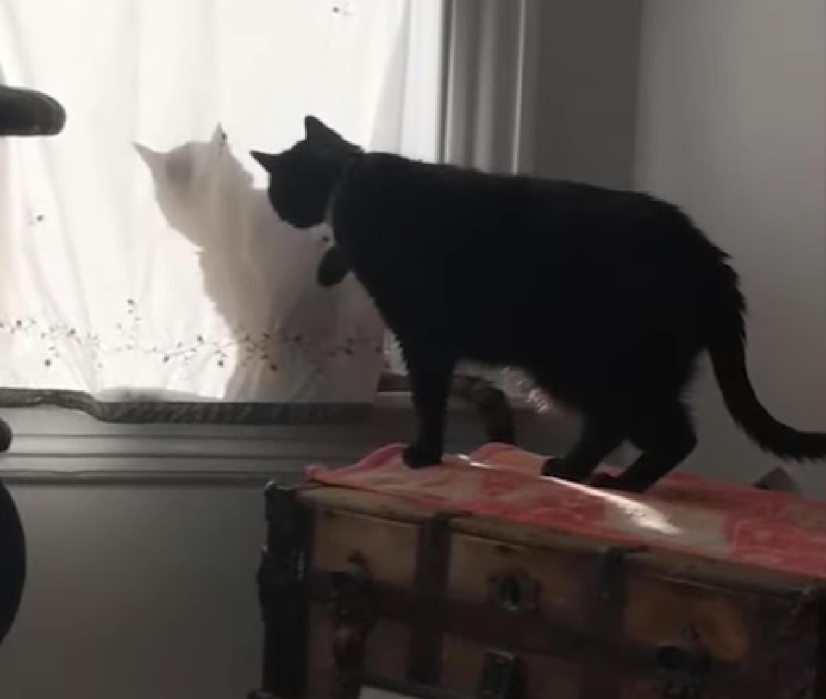 hal gattino ombra tenda curiosità