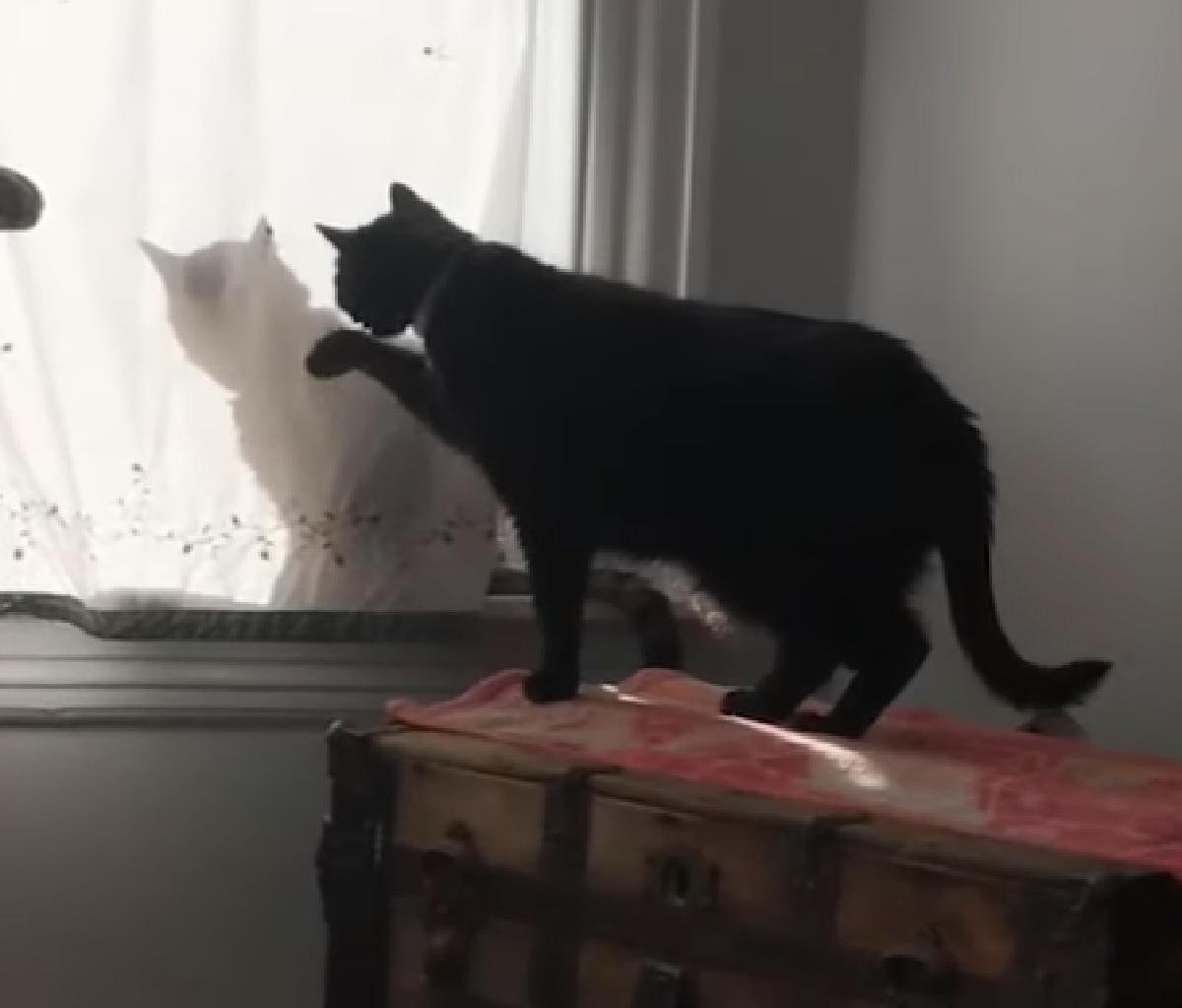 hal gattino ombra charlie altra parte