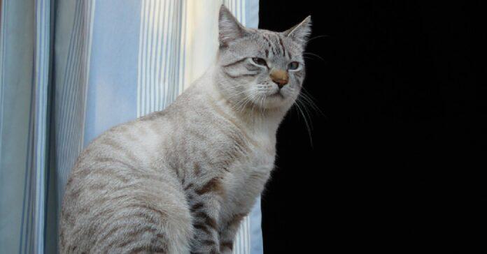 gattino moggy è confuso ombra del fratellino video