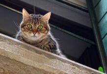 gattino moggy instaura una relazione a distanza altro gattino video