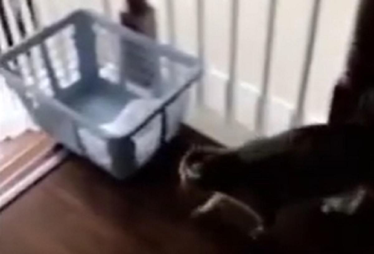 gatto cesta scale