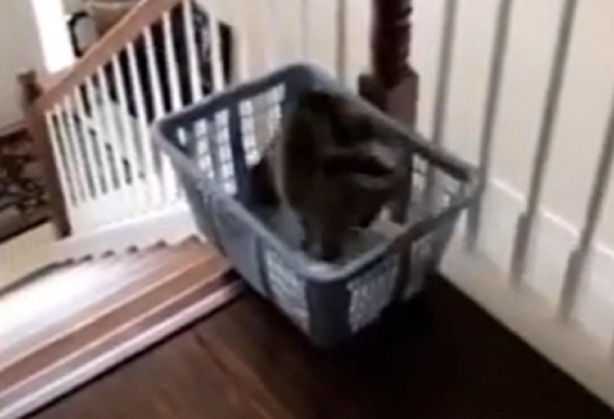 micio scende scale