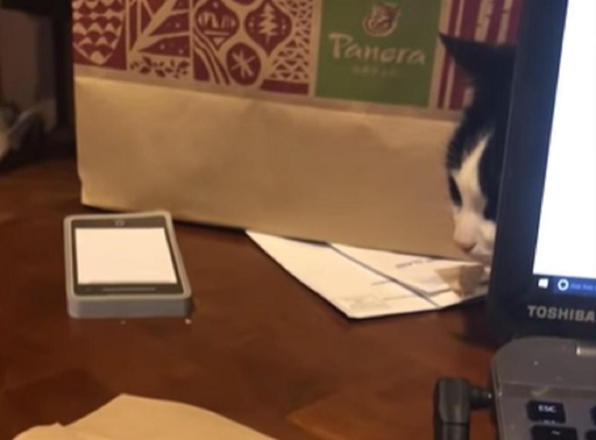 gatto pc nasconde