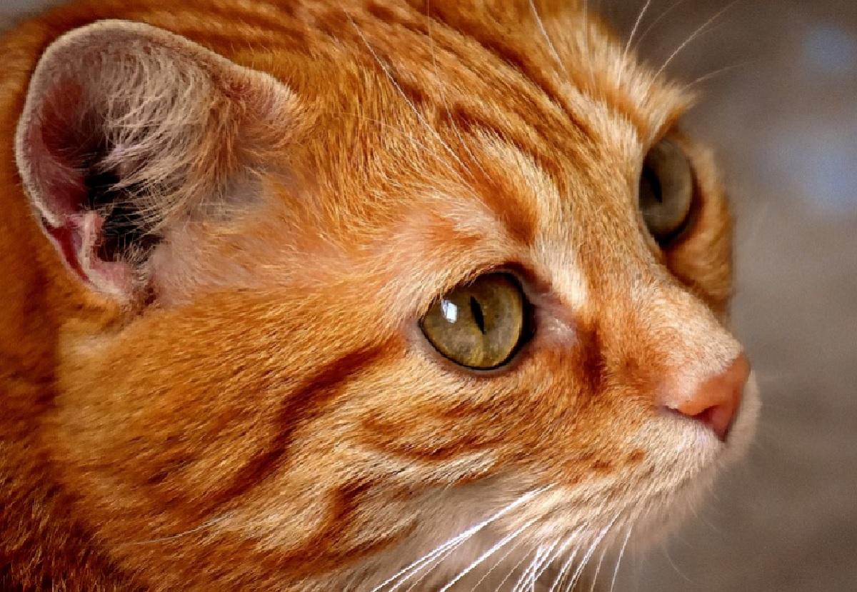 pigeon gattino rosso versi di affetto