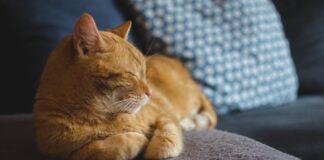 gattino rosso viene adottato il suo amore questo video