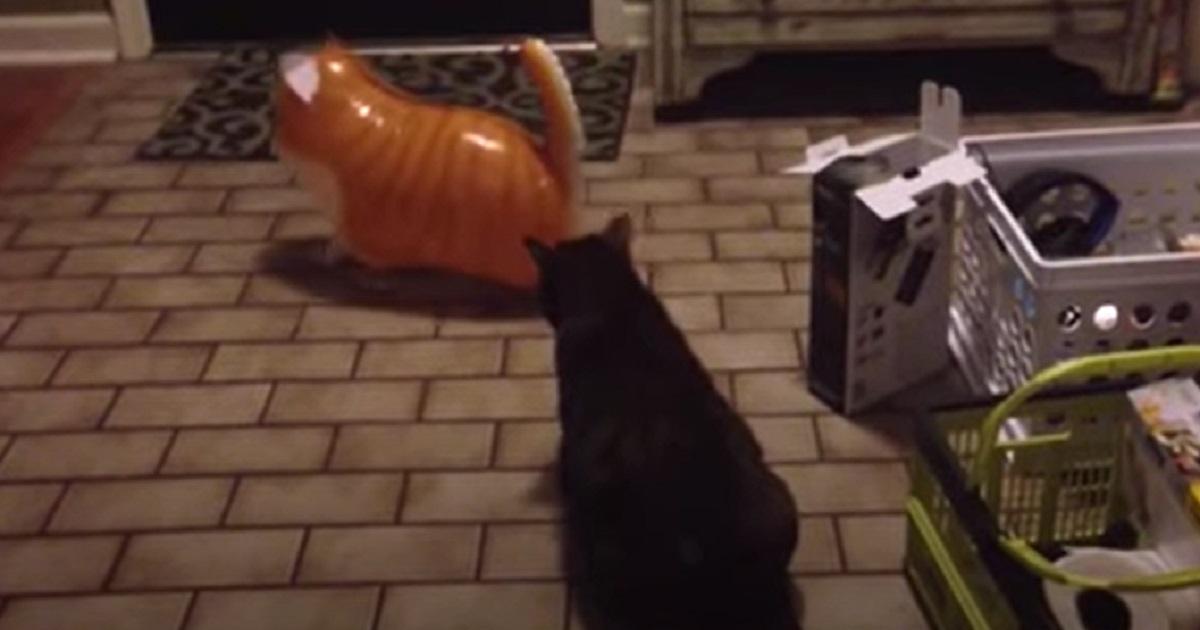 colpire gatto micio