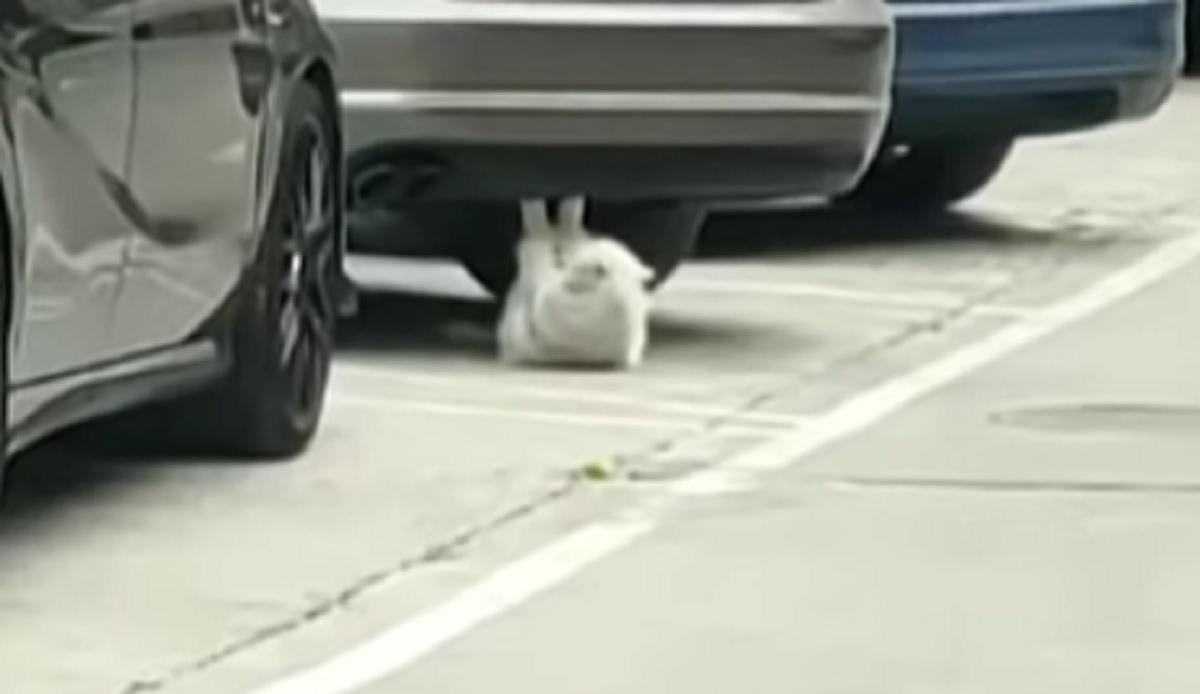 gatto solleva micio