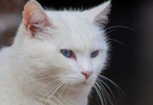 micio gatto addominali