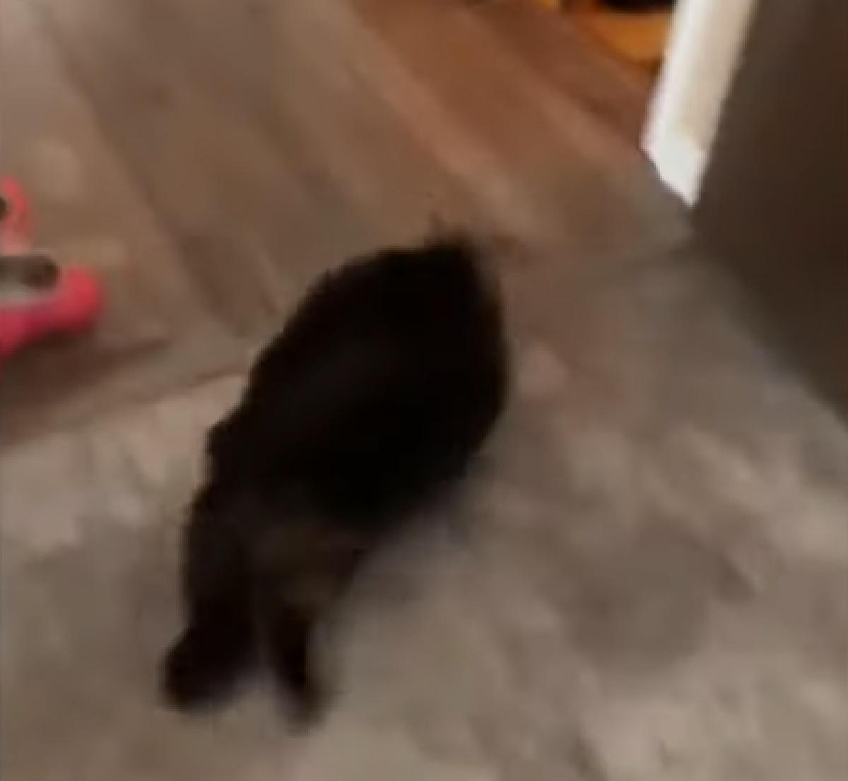 socks gattino risate proprietari