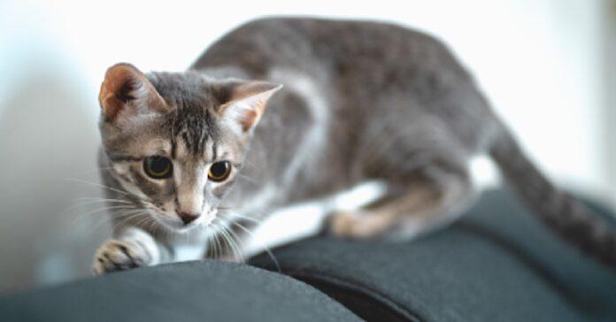 gattino socks allarme antincendio video