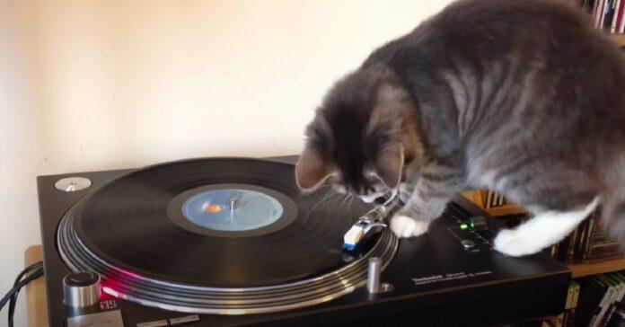 gattino giradischi micio