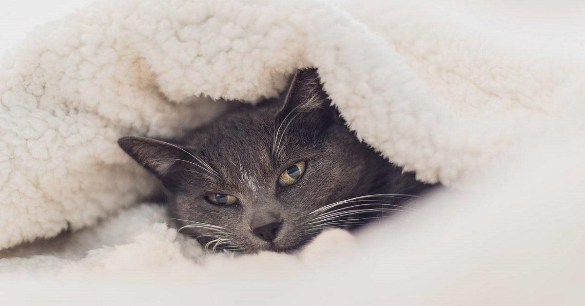 gatto avvolto nelle coperte