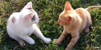 coppia di gattini inventa gioco simpatico video