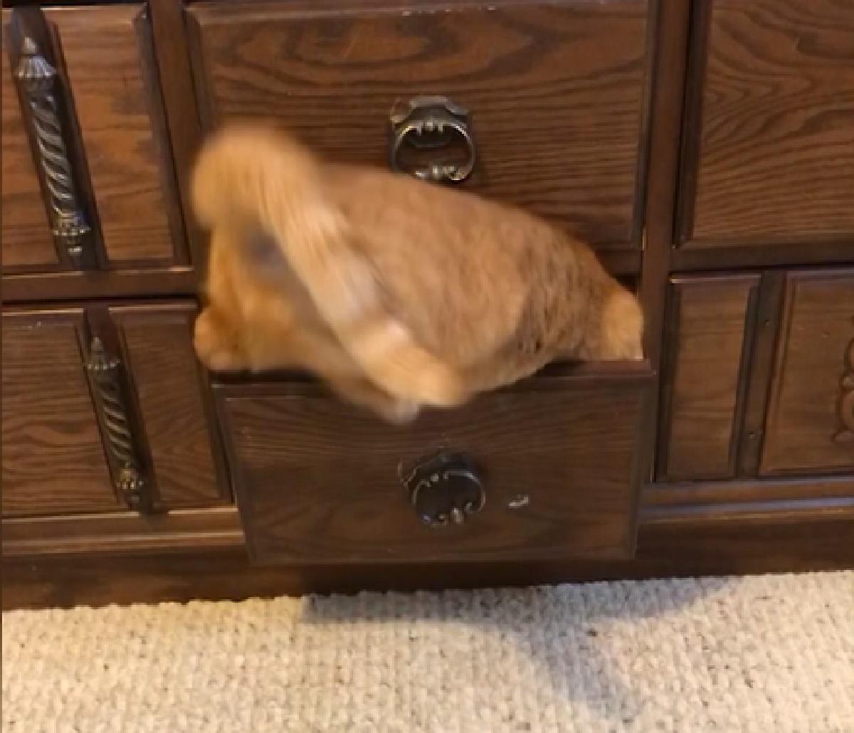gattina callie adora riposare nei posti più strani della casa