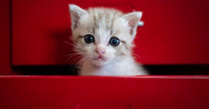gattina callie adora riposare in un luogo inusuale video