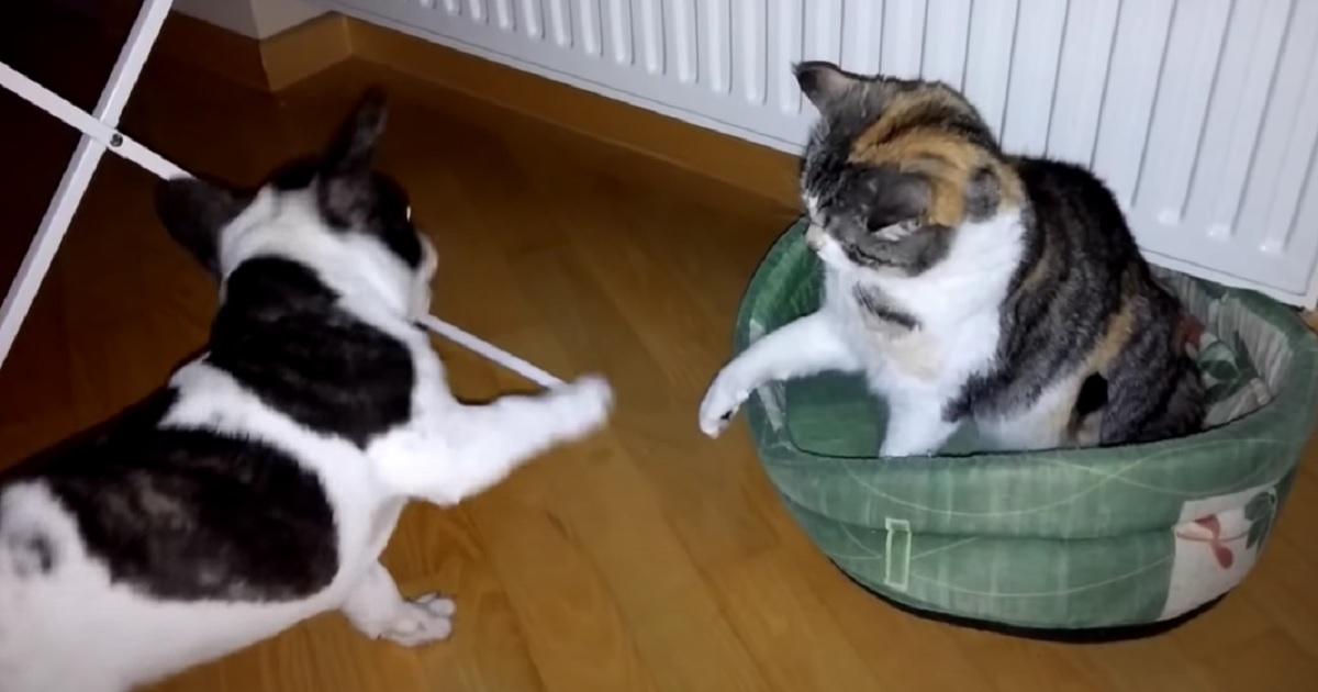 litigio cuccioli amici