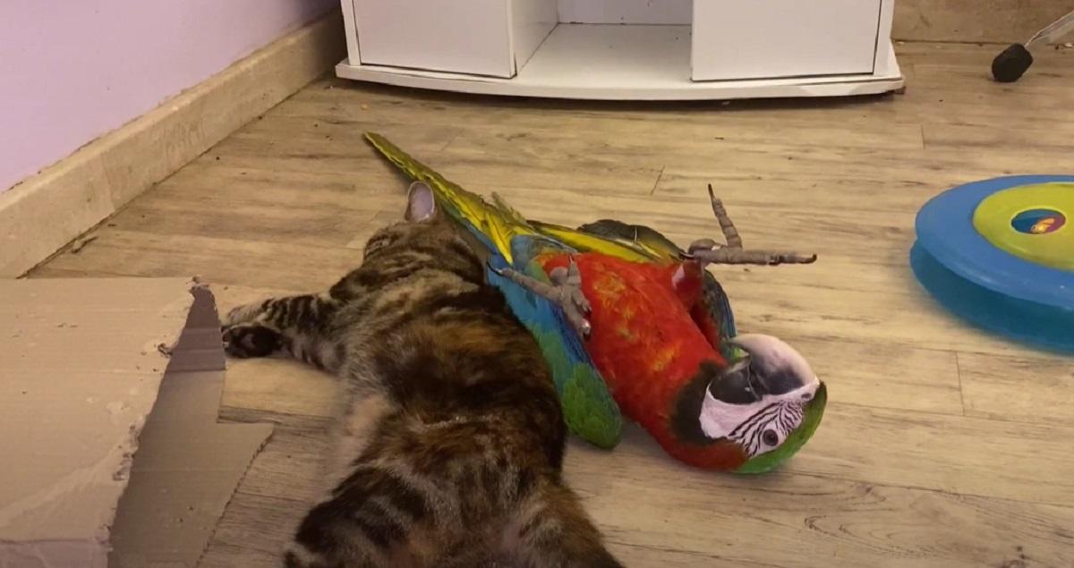 gattino micia giocare