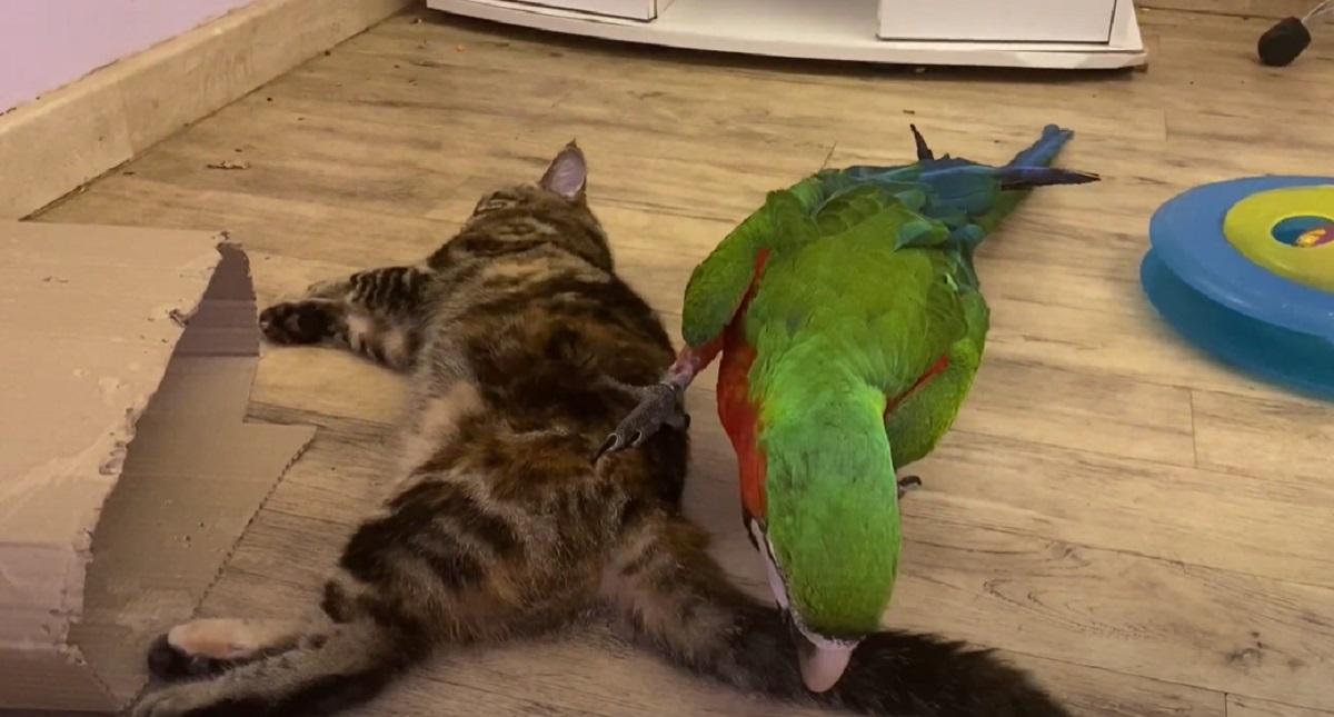 dispetti uccello gatto