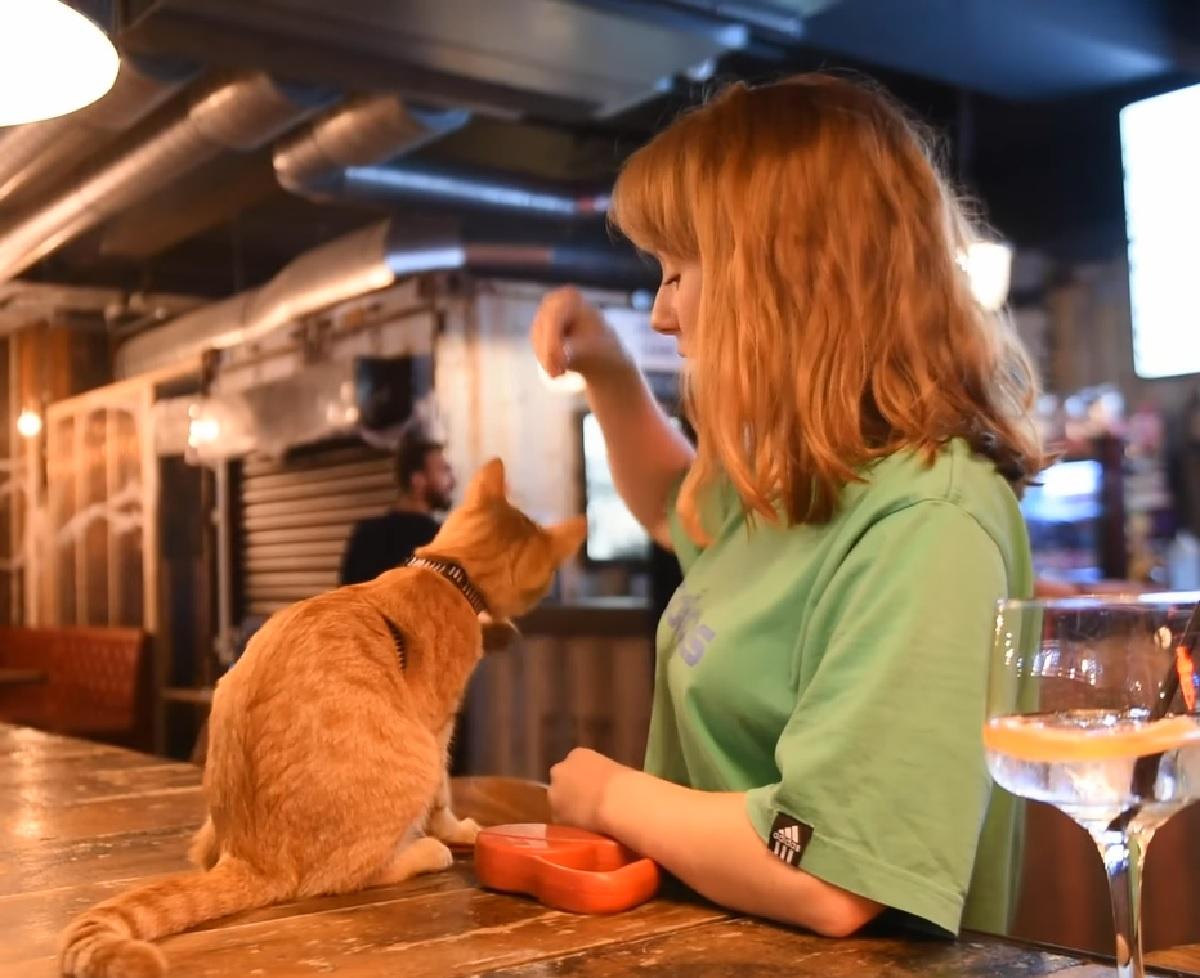 eli gattina spirito libero la porta pub
