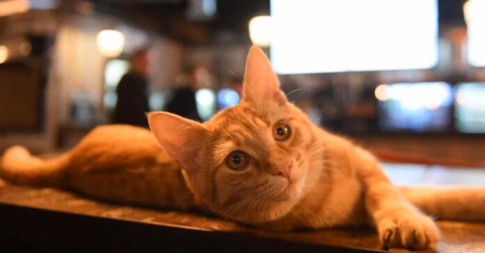 gattina eli diventa un cliente abituale del pub sotto casa la storia in video