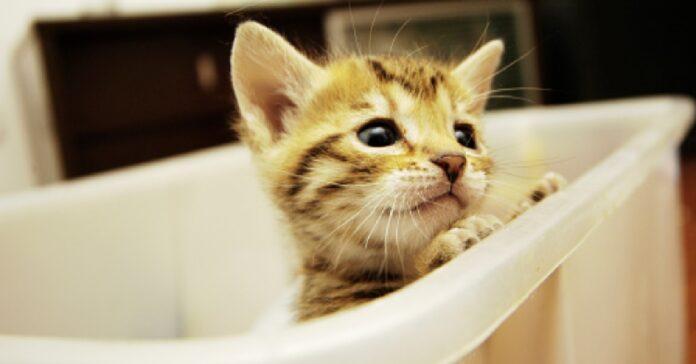 gattina europea osserva prima volta bomba bagno video