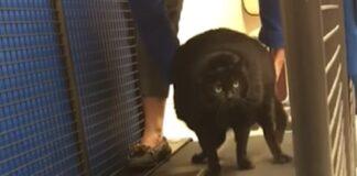 gattina fare ginnastica