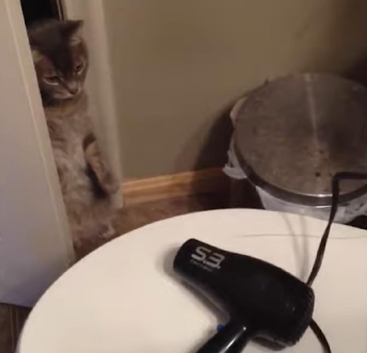 zooey gattina video odio contro asciugacapelli