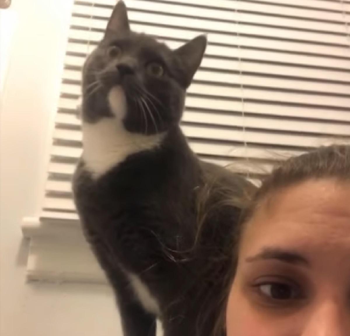 gracie gattina tuxedo obbiettivo telecamera