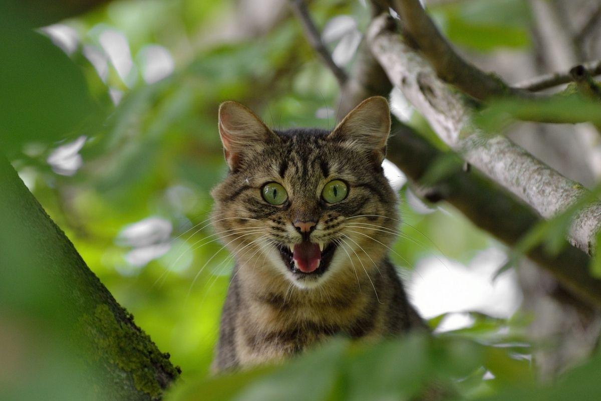 gatto minaccioso tra i rami
