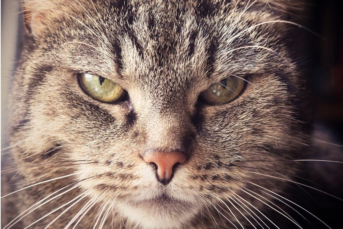 primo piano di un gatto con espressione inquietante