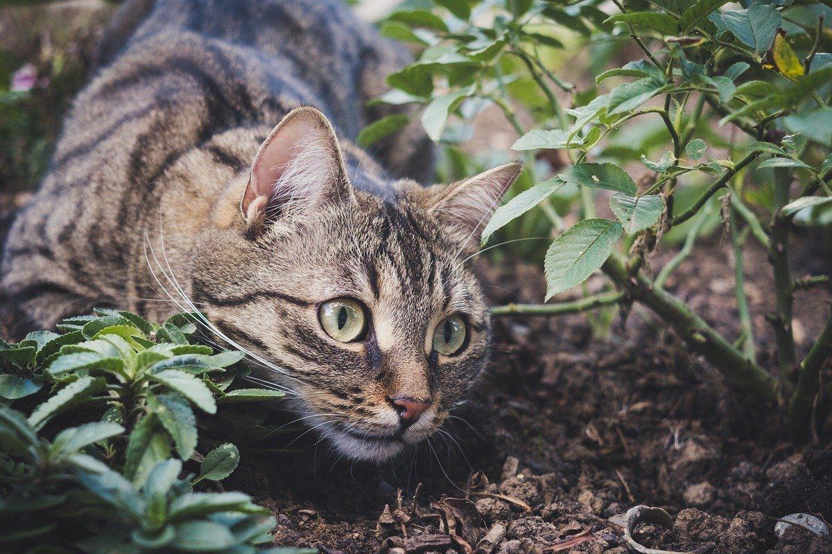 gatto che gioca nel terreno