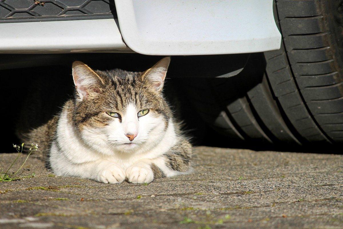 gatto che si nasconde sotto una macchina