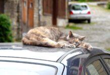 gatto che dorme sul tetto di una macchina