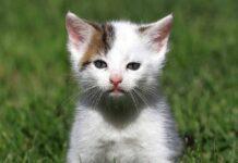 gattino randagio sul prato