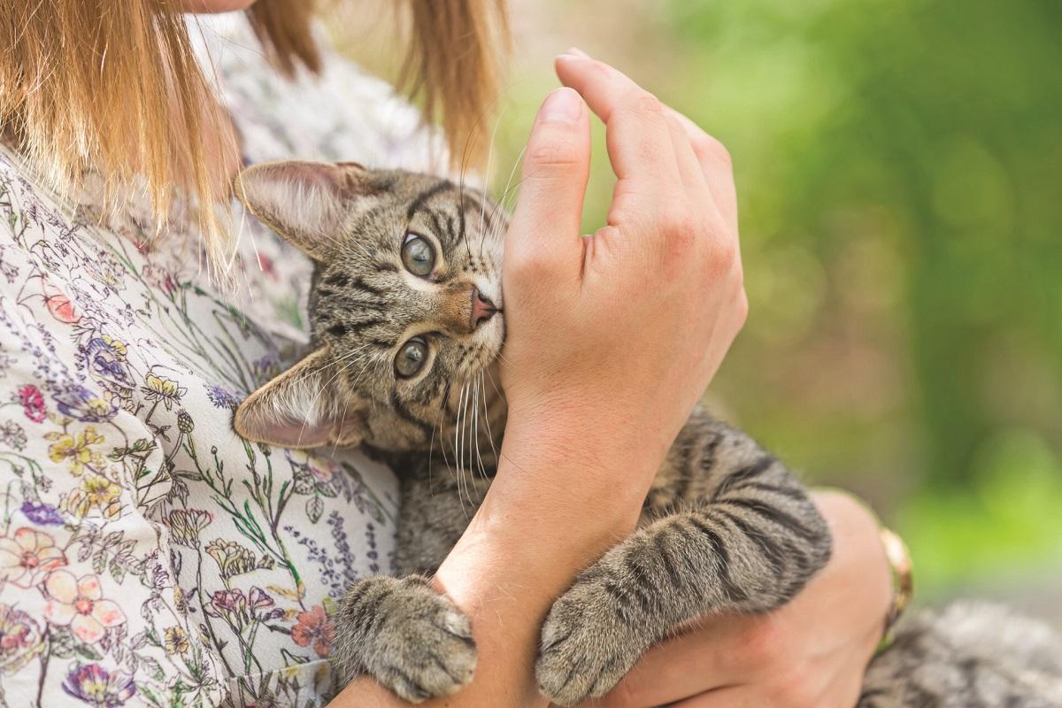 gattino attacca polso