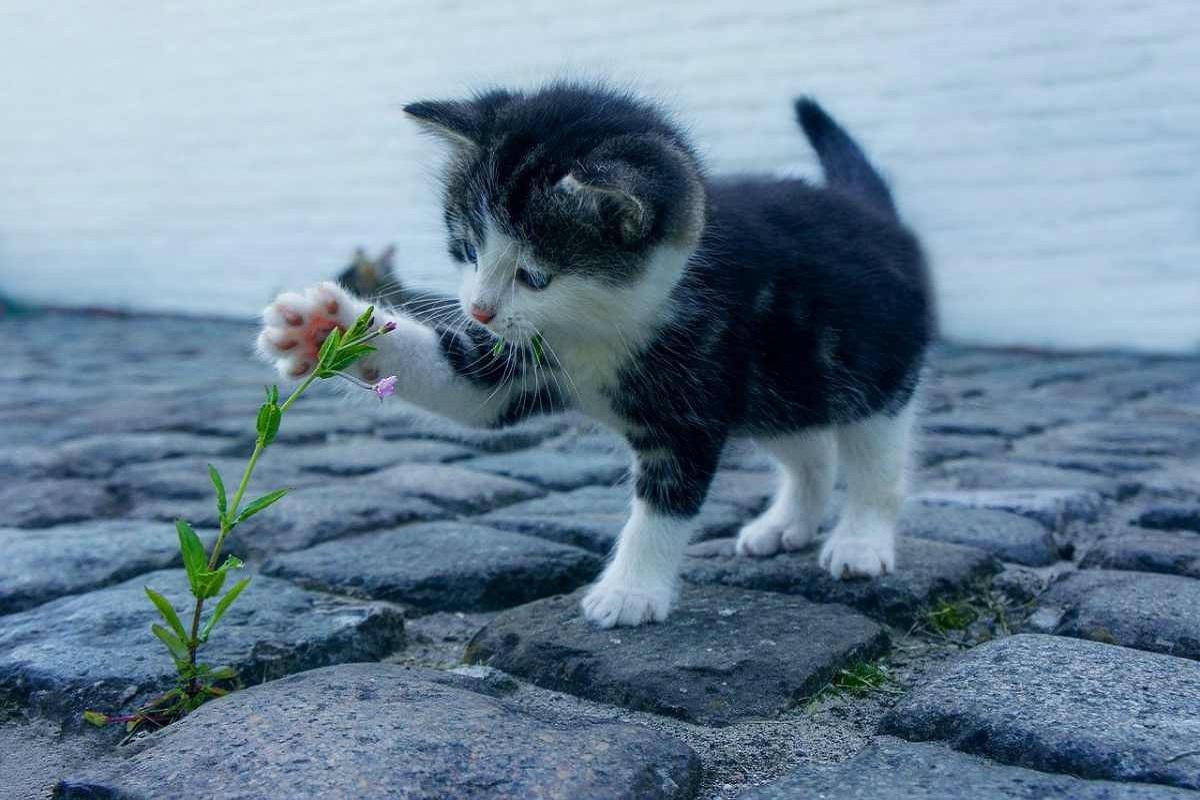 gattino gioca con fiore