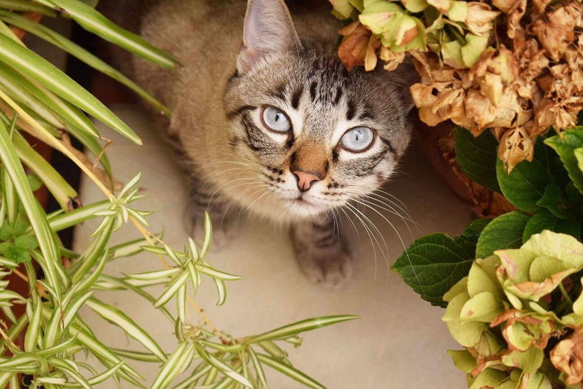 gatto e vegetazione