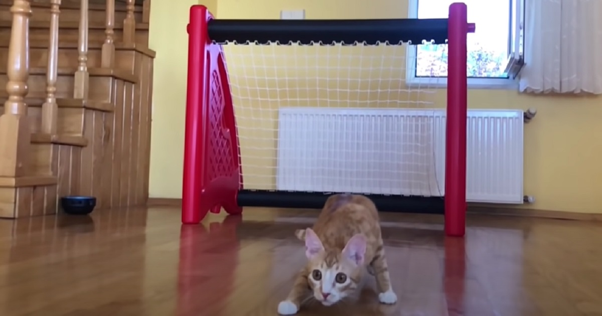 gattino indy porta