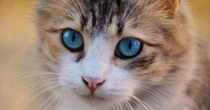 gatto aiutante perfetto