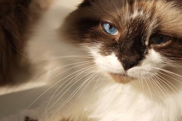 rabbia nel gatto cosa succede