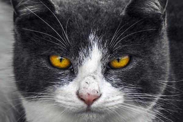 rabbia nel gatto sintomi