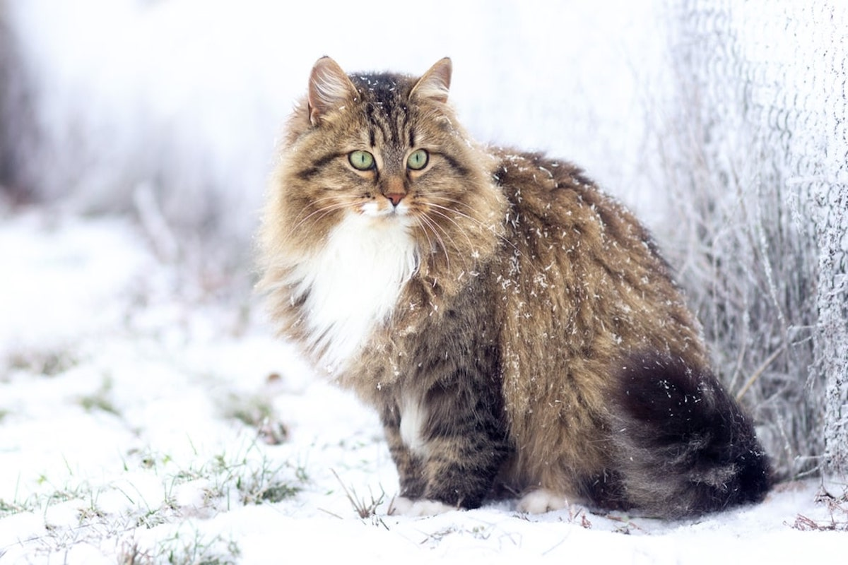 gatto sulla neve
