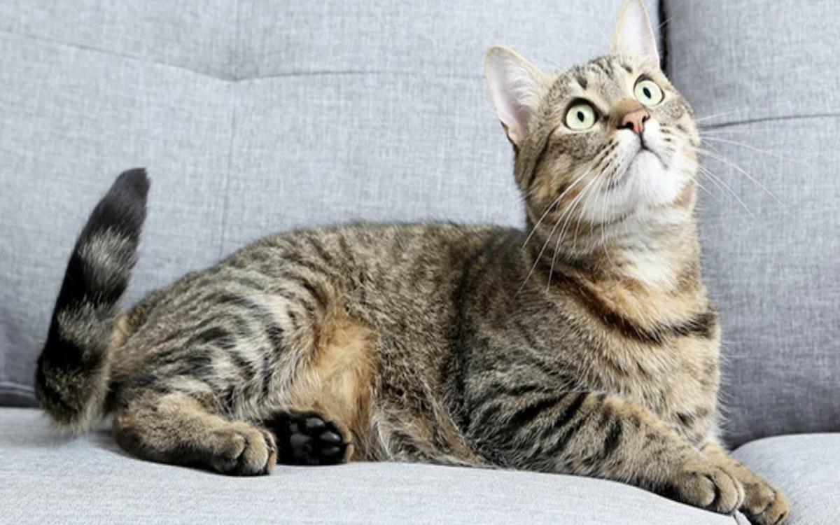 gatto sguardo curioso