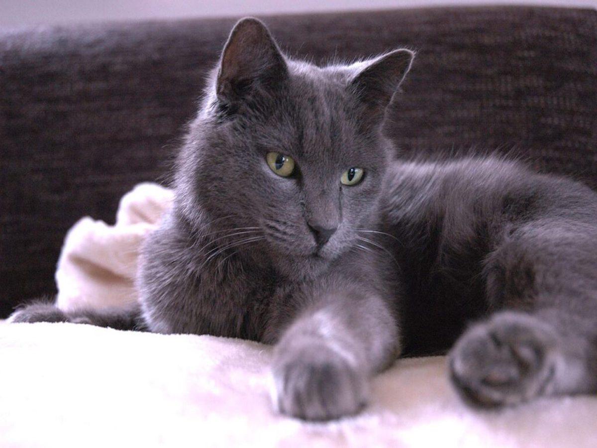 gatto elegante