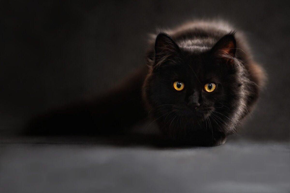 gatto in penombra